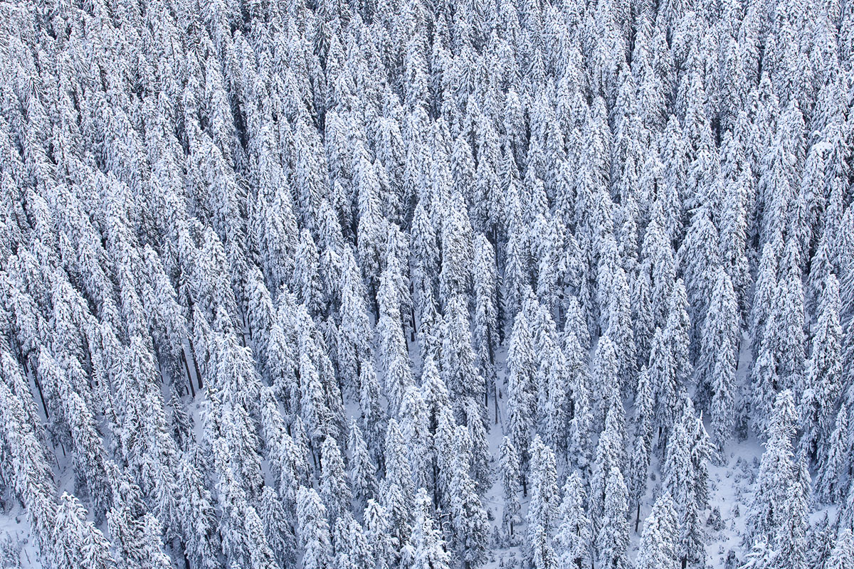 A beautiful Northwest forest in the snow.