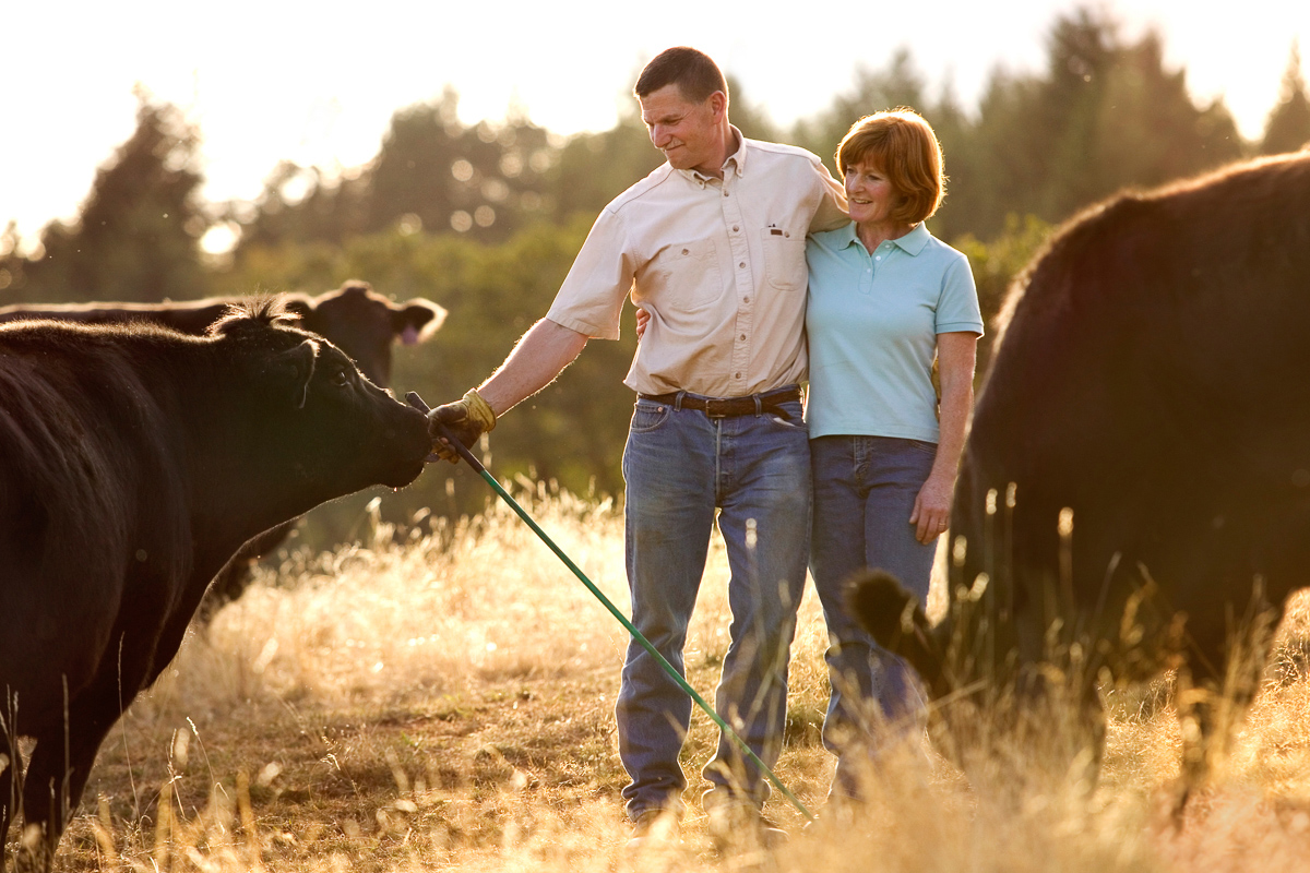 Middle aged couple in field with black angus cattle